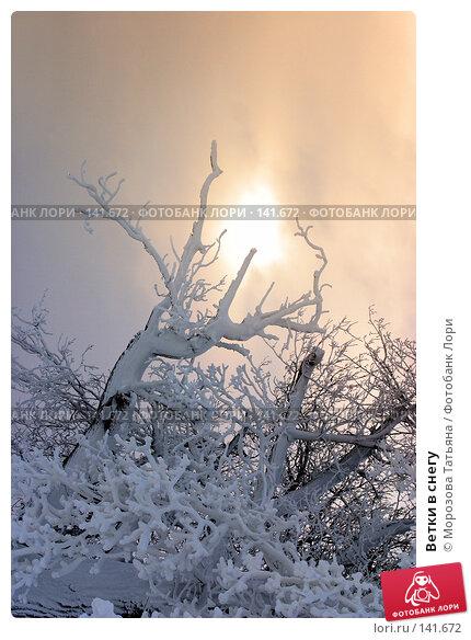 Ветки в снегу, фото № 141672, снято 10 декабря 2005 г. (c) Морозова Татьяна / Фотобанк Лори