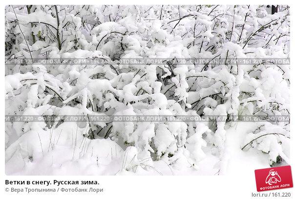 Ветки в снегу. Русская зима., фото № 161220, снято 20 августа 2017 г. (c) Вера Тропынина / Фотобанк Лори