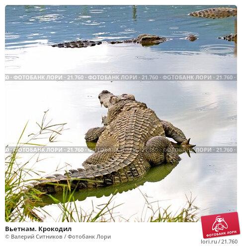 Вьетнам. Крокодил, фото № 21760, снято 11 февраля 2007 г. (c) Валерий Ситников / Фотобанк Лори
