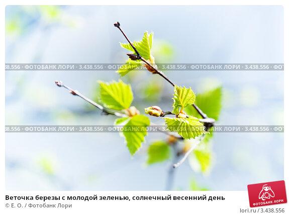 Купить «Веточка березы с молодой зеленью, солнечный весенний день», фото № 3438556, снято 30 апреля 2011 г. (c) Екатерина Овсянникова / Фотобанк Лори