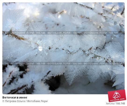Веточки в инее, фото № 166148, снято 2 января 2008 г. (c) Петрова Ольга / Фотобанк Лори