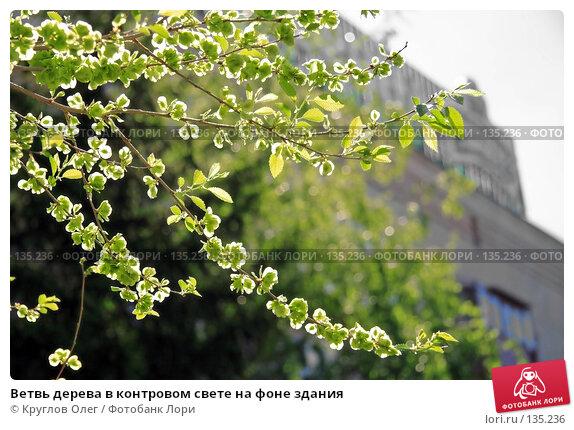Купить «Ветвь дерева в контровом свете на фоне здания», фото № 135236, снято 27 мая 2006 г. (c) Круглов Олег / Фотобанк Лори
