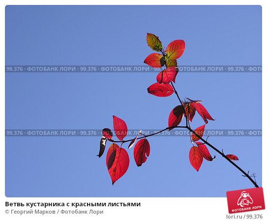 Ветвь кустарника с красными листьями, фото № 99376, снято 10 октября 2004 г. (c) Георгий Марков / Фотобанк Лори