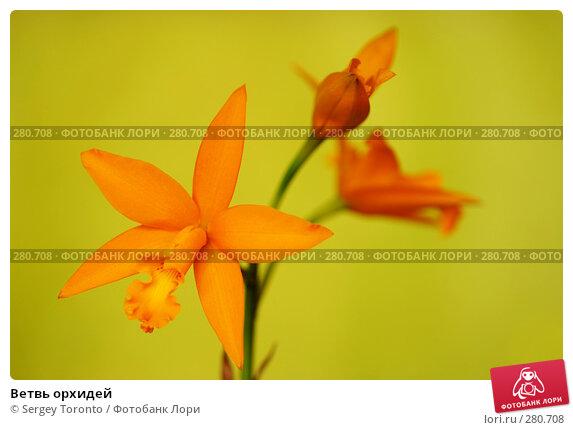 Ветвь орхидей, фото № 280708, снято 6 мая 2008 г. (c) Sergey Toronto / Фотобанк Лори