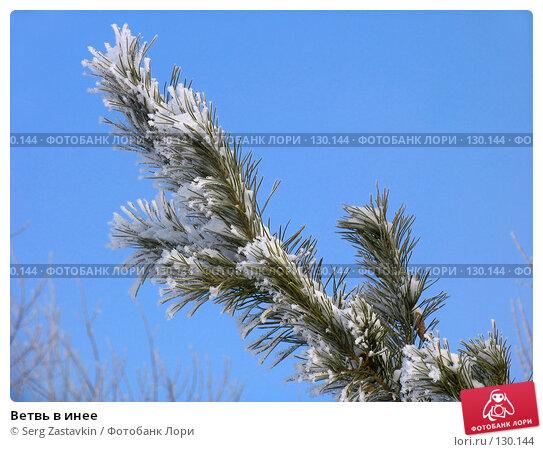Ветвь в инее, фото № 130144, снято 25 марта 2005 г. (c) Serg Zastavkin / Фотобанк Лори