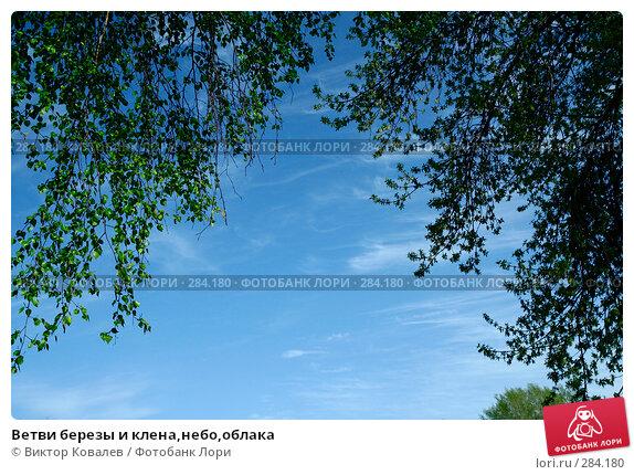 Ветви березы и клена,небо,облака, фото № 284180, снято 12 мая 2008 г. (c) Виктор Ковалев / Фотобанк Лори
