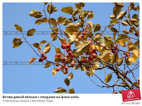 Ветви дикой яблони с плодами на фоне неба, фото № 98064, снято 29 сентября 2007 г. (c) Моисеева Галина / Фотобанк Лори