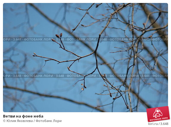 Ветви на фоне неба, фото № 3648, снято 26 апреля 2006 г. (c) Юлия Яковлева / Фотобанк Лори