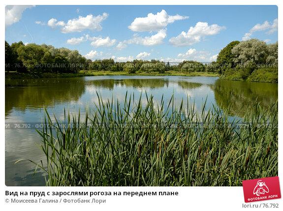 Вид на пруд с зарослями рогоза на переднем плане, фото № 76792, снято 23 июля 2007 г. (c) Моисеева Галина / Фотобанк Лори