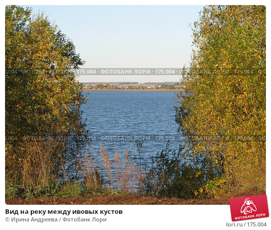 Купить «Вид на реку между ивовых кустов», фото № 175004, снято 26 сентября 2006 г. (c) Ирина Андреева / Фотобанк Лори