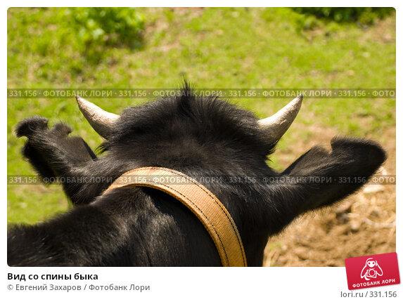 Вид со спины быка, фото № 331156, снято 31 мая 2008 г. (c) Евгений Захаров / Фотобанк Лори