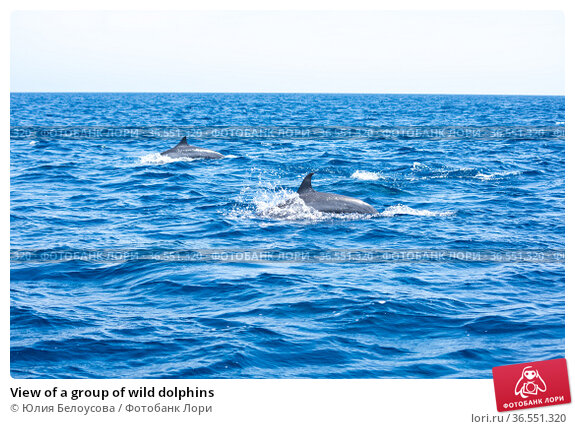 View of a group of wild dolphins (2018 год). Стоковое фото, фотограф Юлия Белоусова / Фотобанк Лори