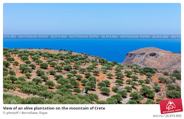 Купить «View of an olive plantation on the mountain of Crete», фото № 26815892, снято 9 июля 2017 г. (c) photoff / Фотобанк Лори