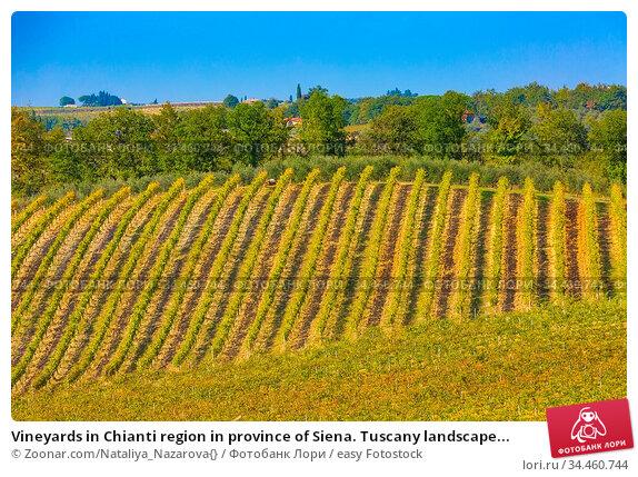 Vineyards in Chianti region in province of Siena. Tuscany landscape... Стоковое фото, фотограф Zoonar.com/Nataliya_Nazarova{} / easy Fotostock / Фотобанк Лори