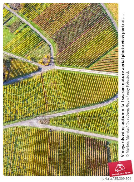 Vineyards wine autumn fall season nature aerial photo view portrait... Стоковое фото, фотограф Markus Mainka / easy Fotostock / Фотобанк Лори