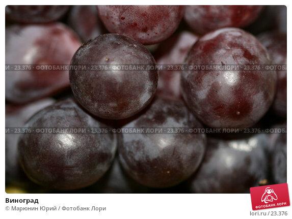 Купить «Виноград», фото № 23376, снято 8 марта 2007 г. (c) Марюнин Юрий / Фотобанк Лори