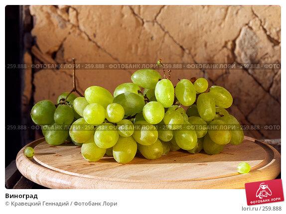 Виноград, фото № 259888, снято 6 сентября 2004 г. (c) Кравецкий Геннадий / Фотобанк Лори