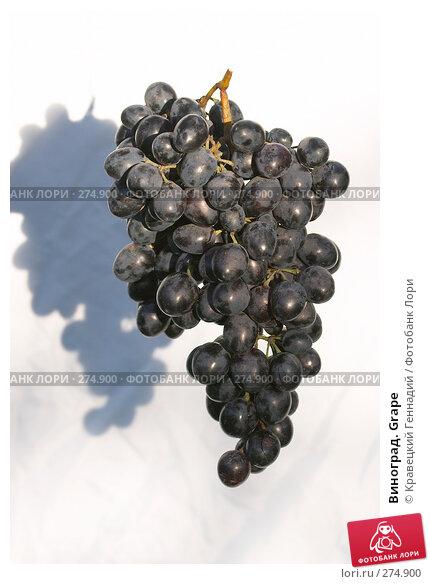 Купить «Виноград. Grape», фото № 274900, снято 12 сентября 2004 г. (c) Кравецкий Геннадий / Фотобанк Лори