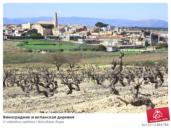 Купить «Виноградник и испанская деревня», фото № 2864784, снято 19 марта 2011 г. (c) valentina vasilieva / Фотобанк Лори