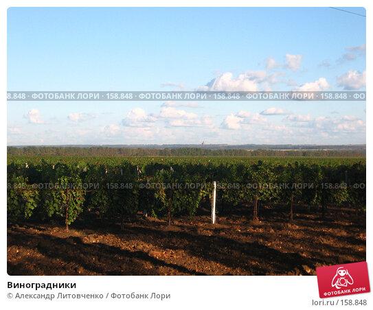 Виноградники, фото № 158848, снято 11 сентября 2007 г. (c) Александр Литовченко / Фотобанк Лори