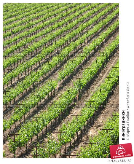 Купить «Виноградники», фото № 318132, снято 21 мая 2008 г. (c) Марина Грибок / Фотобанк Лори
