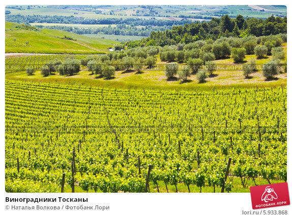 Виноградники Тосканы, фото № 5933868, снято 12 мая 2014 г. (c) Наталья Волкова / Фотобанк Лори