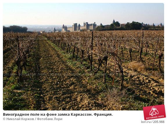 Виноградное поле на фоне замка Каркассон. Франция., фото № 205988, снято 30 декабря 2006 г. (c) Николай Коржов / Фотобанк Лори