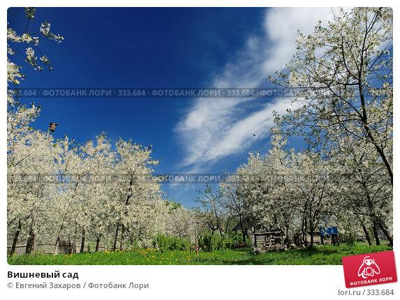 Вишневый сад, фото № 333684, снято 9 мая 2008 г. (c) Евгений Захаров / Фотобанк Лори