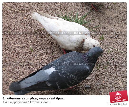 Купить «Влюбленные голубки, неравный брак», фото № 161440, снято 24 августа 2005 г. (c) Анна Драгунская / Фотобанк Лори
