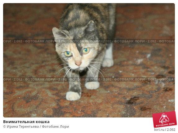 Внимательная кошка, эксклюзивное фото № 2092, снято 17 июня 2005 г. (c) Ирина Терентьева / Фотобанк Лори