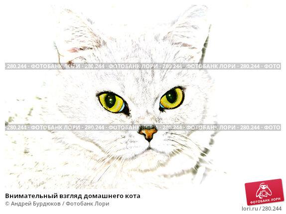 Внимательный взгляд домашнего кота, фото № 280244, снято 10 ноября 2007 г. (c) Андрей Бурдюков / Фотобанк Лори
