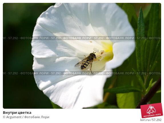 Купить «Внутри цветка», фото № 57292, снято 24 июля 2006 г. (c) Argument / Фотобанк Лори