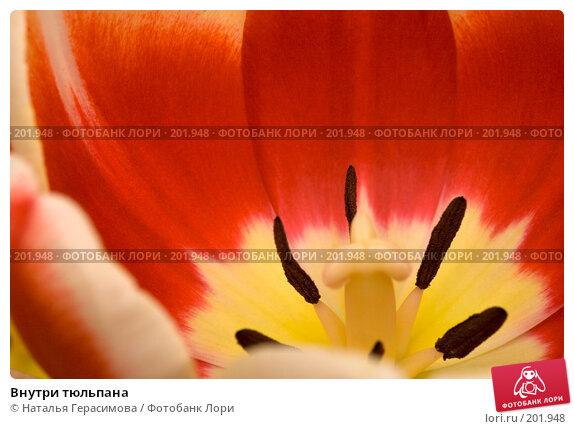 Внутри тюльпана, фото № 201948, снято 14 февраля 2008 г. (c) Наталья Герасимова / Фотобанк Лори