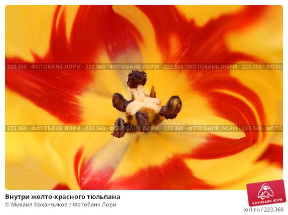 Внутри желто-красного тюльпана, фото № 223360, снято 8 марта 2008 г. (c) Михаил Коханчиков / Фотобанк Лори
