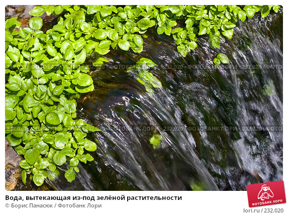 Вода, вытекающая из-под зелёной растительности, фото № 232020, снято 22 марта 2008 г. (c) Борис Панасюк / Фотобанк Лори