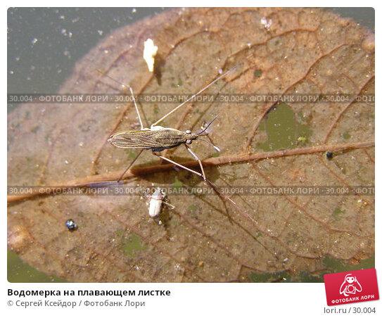 Водомерка на плавающем листке, фото № 30004, снято 6 мая 2006 г. (c) Сергей Ксейдор / Фотобанк Лори