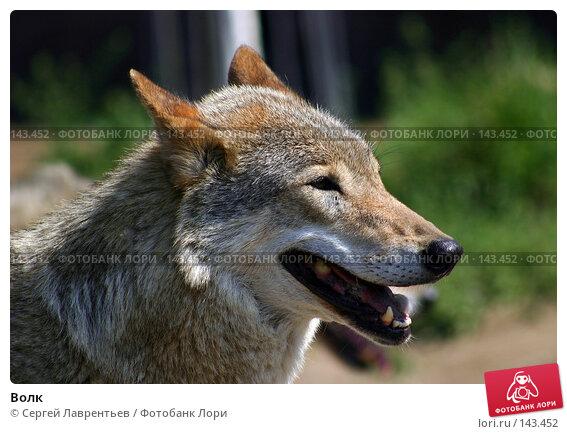 Купить «Волк», фото № 143452, снято 24 июня 2004 г. (c) Сергей Лаврентьев / Фотобанк Лори