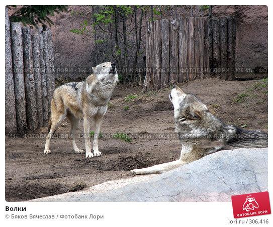 Волки, фото № 306416, снято 16 апреля 2008 г. (c) Бяков Вячеслав / Фотобанк Лори