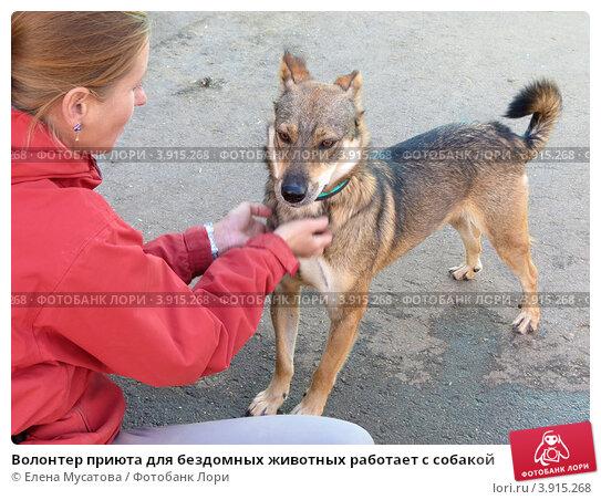 Волонтер приюта для бездомных животных работает с собакой. Стоковое фото, фотограф Елена Мусатова / Фотобанк Лори