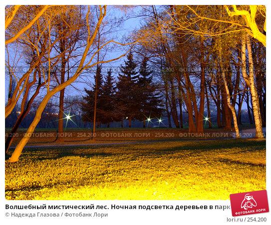 Волшебный мистический лес. Ночная подсветка деревьев в парке., фото № 254200, снято 12 апреля 2008 г. (c) Надежда Глазова / Фотобанк Лори