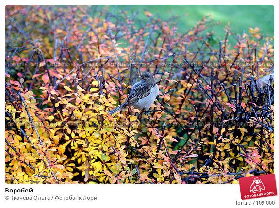 Воробей, фото № 109000, снято 27 октября 2007 г. (c) Ткачёва Ольга / Фотобанк Лори