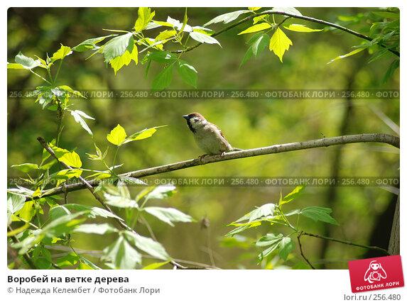 Воробей на ветке дерева, фото № 256480, снято 13 мая 2007 г. (c) Надежда Келембет / Фотобанк Лори