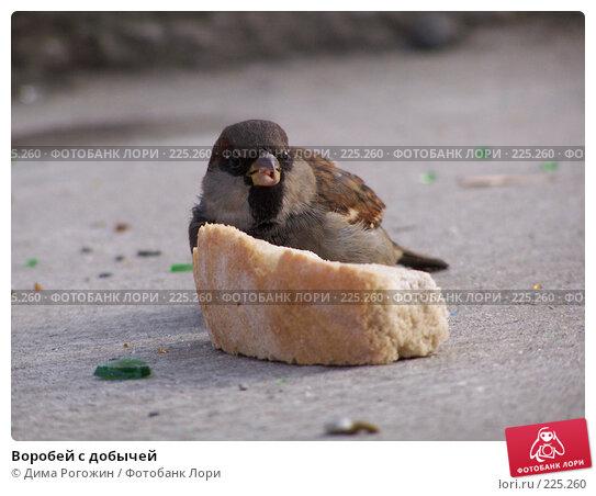 Купить «Воробей с добычей», фото № 225260, снято 13 ноября 2007 г. (c) Дима Рогожин / Фотобанк Лори