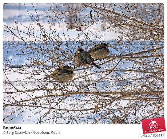 Воробьи, фото № 134584, снято 15 декабря 2004 г. (c) Serg Zastavkin / Фотобанк Лори