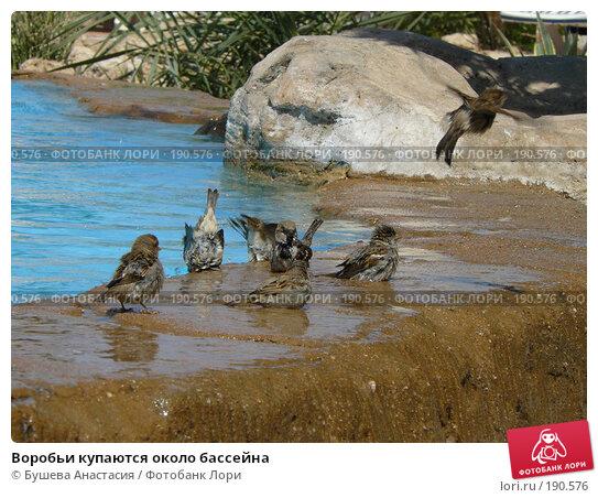 Воробьи купаются около бассейна, фото № 190576, снято 1 октября 2007 г. (c) Бушева Анастасия / Фотобанк Лори