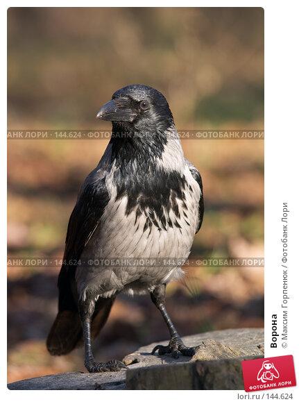 Купить «Ворона», фото № 144624, снято 23 декабря 2006 г. (c) Максим Горпенюк / Фотобанк Лори