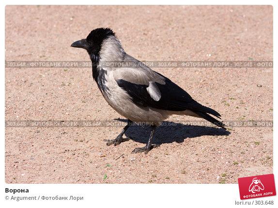 Ворона, фото № 303648, снято 28 мая 2008 г. (c) Argument / Фотобанк Лори