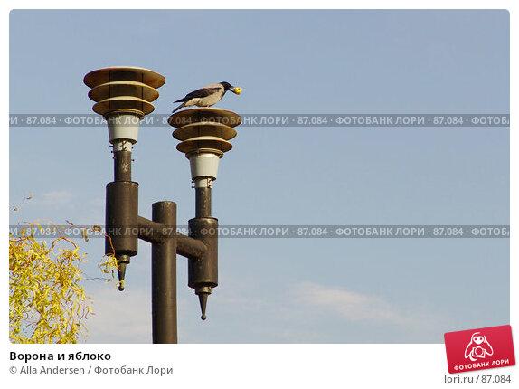 Ворона и яблоко, фото № 87084, снято 23 октября 2005 г. (c) Alla Andersen / Фотобанк Лори