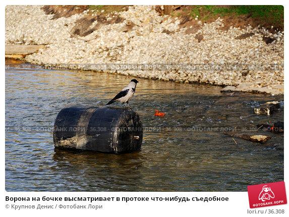 Ворона на бочке высматривает в протоке что-нибудь съедобное, фото № 36308, снято 27 марта 2007 г. (c) Крупнов Денис / Фотобанк Лори