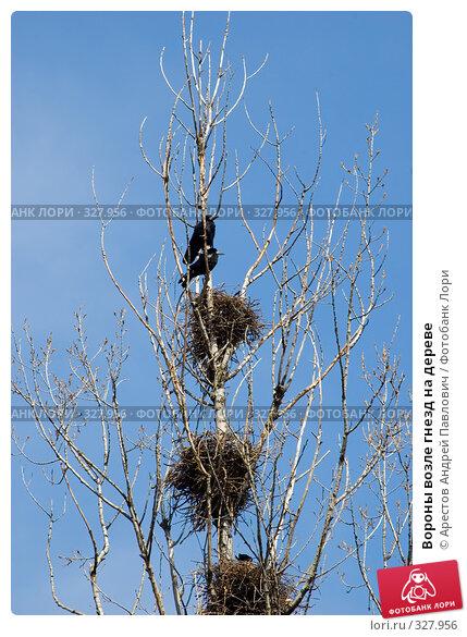 Вороны возле гнезд на дереве, фото № 327956, снято 30 марта 2008 г. (c) Арестов Андрей Павлович / Фотобанк Лори